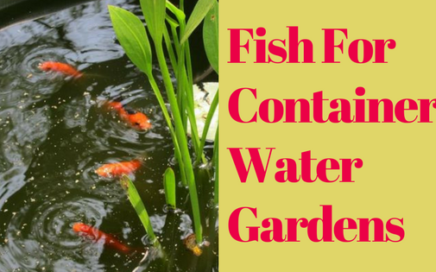 Fish For Container Water Gardens