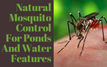 Natural Mosquito Control For Ponds And Water Features