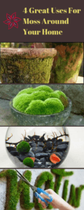 4 great uses for moss around your home