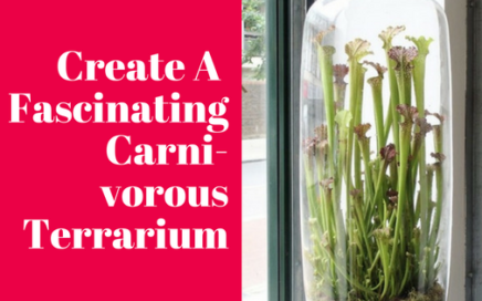 Create A Fascinating Carnivorous Terrarium