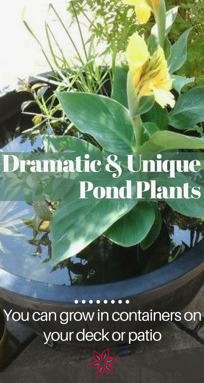 Water garden plants container water gardens for Best aquatic plants