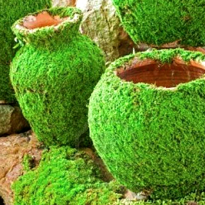 How To Grow Moss On Pots And Rocks Container Water Gardens
