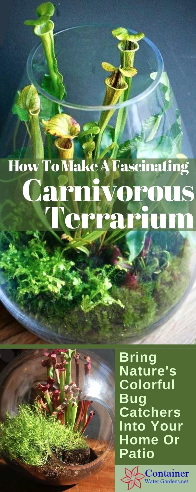 Create A Fascinating Carnivorous Terrarium Container Water Gardens