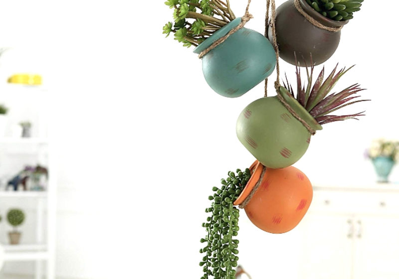 Hanging-Succulents-Featured-Image-800x560.jpg