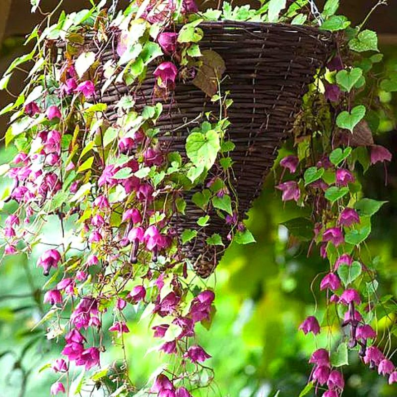 23 Outstanding Plants For Hanging Baskets Container Water Gardens